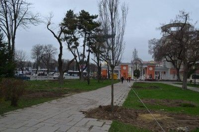Странную высадку деревьев в Симферополе объяснили невидимыми дорожками