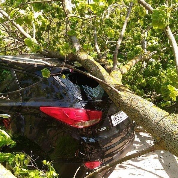 В Севастополе рухнувшее дерево помяло Hyundai