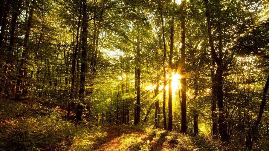 Минприроды Крыма сообщает о проведении в Кировской области II лесного форума