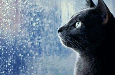 Крыму пообещали два дождливых дня