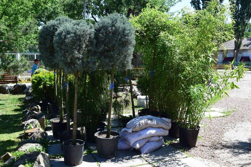 В Детском парке Симферополя высадят 120 экзотических растений