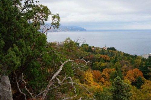 Вырубка краснокнижных деревьев в Ялте: ущерб на 200 лет