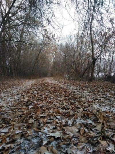 В Крыму закрывают леса от людей