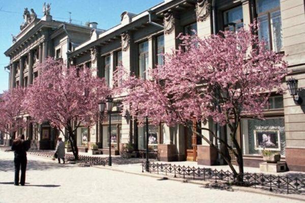 Лукашев пообещал высадить новые сливы Писсарди в центре Симферополя вместо вырубленных