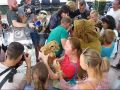 В Парке львов «Тайган» гостям давали подержать котят