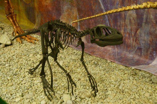 Первый крымский динозавр поселился в музее Никитского ботанического сада