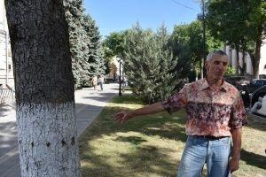В Симферополе спасают сухие и больные деревья