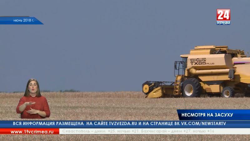 Несмотря на засуху: по прогнозам учёных, крымские аграрии могут собрать в этом году до 800 тысяч тонн зерновых