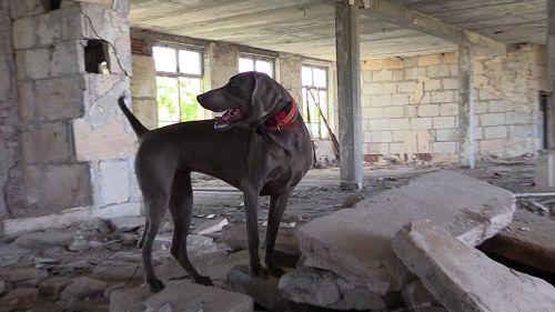 Специалисты «РОССОЮЗСПАС» проводят учебно-тренировочные сборы по аттестации служебных собак подготовленных для проведения поисково-спасательных работ в Республике Крым