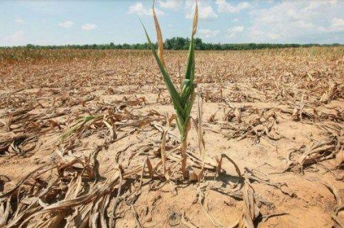 Режим ЧС из-за засухи вводится еще в нескольких районах Крыма