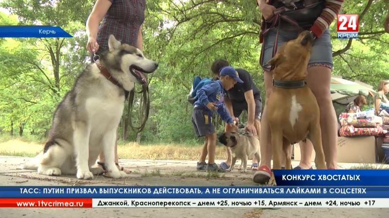 Мокрый нос и умный взгляд. Международная выставка собак «Звёзды Пантикапея» впервые прошла в Керчи