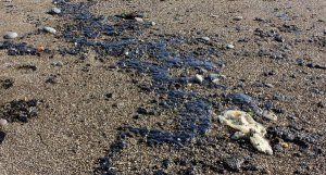 Власти Гурзуфа отчитались о полной очистке пляжей от мазута