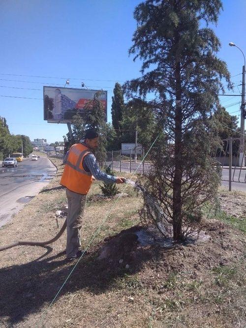 На Проспекте Победы продолжаются работы по уходу за зелеными насаждениями