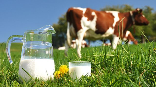 О контроле за качеством и безопасностью молочной продукции