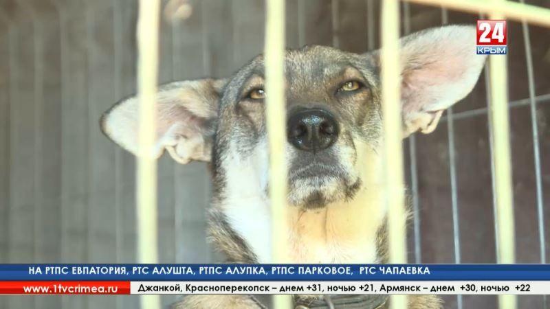 В ответе за тех, кого приручили. Первый в Крыму приют для животных должен появиться к концу 2019 года в Симферополе