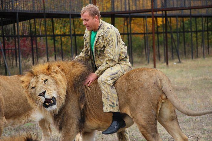 В крымском сафари-парке «Тайган» лев укусил женщину