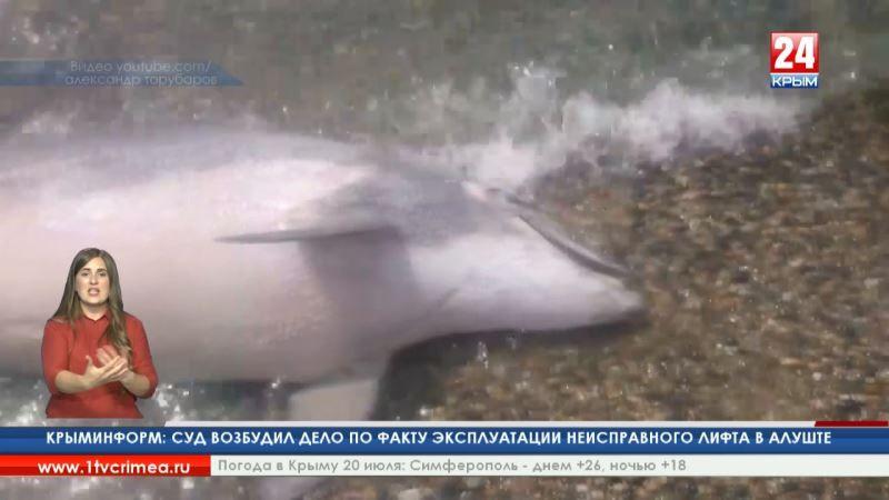 А. Артов: «За полгода на крымском побережье местные жители обнаружили более 200 мёртвых дельфинов»