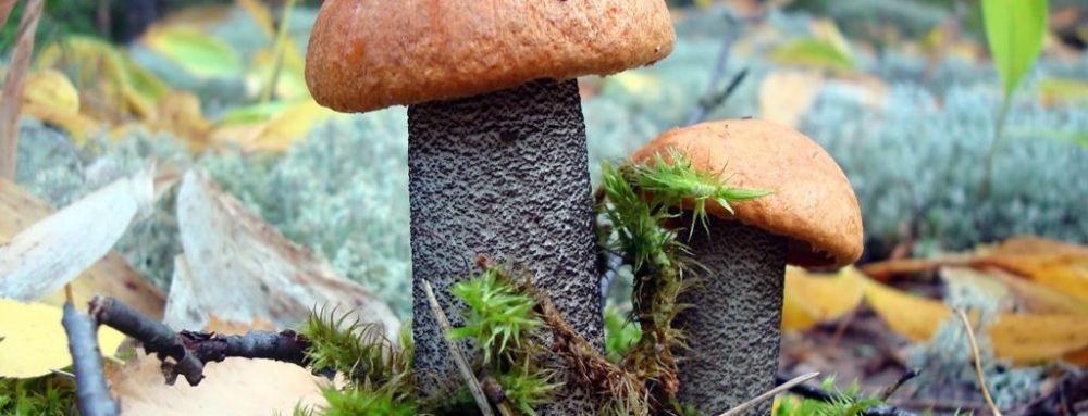 В Крыму 15 человек отравились грибами