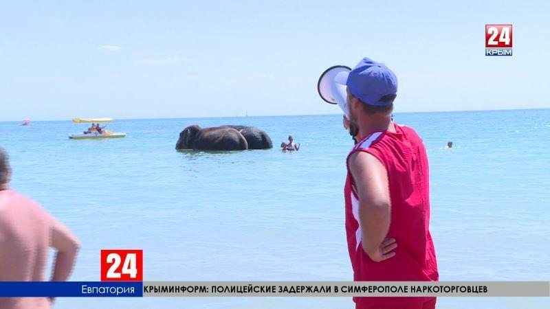 Риск ради селфи. Слоны на набережной Евпатории вызвали аншлаг