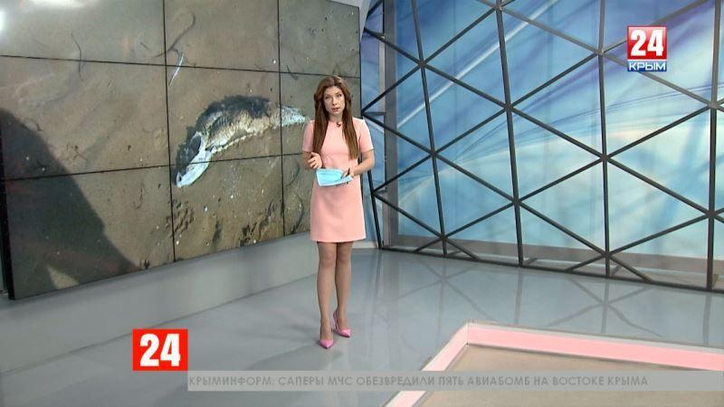 На побережье Азовского моря обнаружены мёртвые осетры и дельфины. Причины массовой гибели выясняются