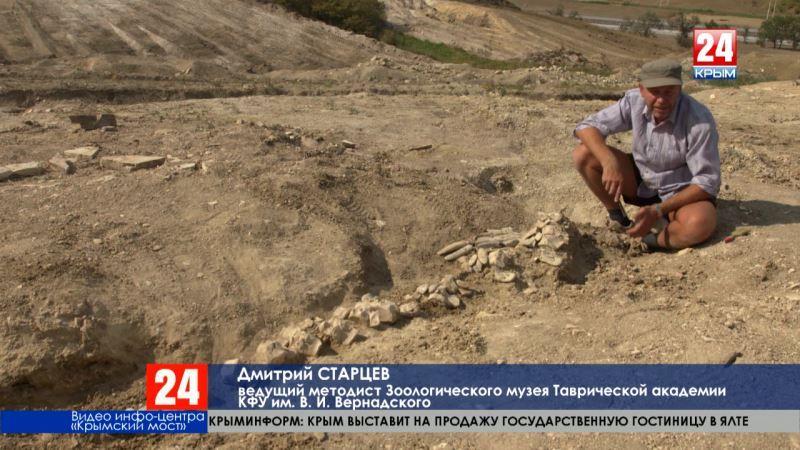 Палеонтологи изучают останки древнего кита. Окаменевшие кости нашли на участке будущей железной дороги-подхода к Крымскому мосту