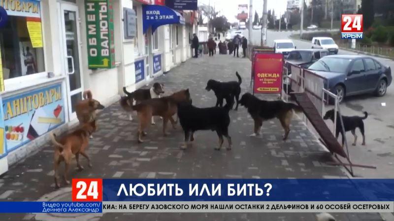 Без еды и конуры. Журналисты телеканала «Крым 24» узнали, как решается проблема бездомных животных в Симферополе