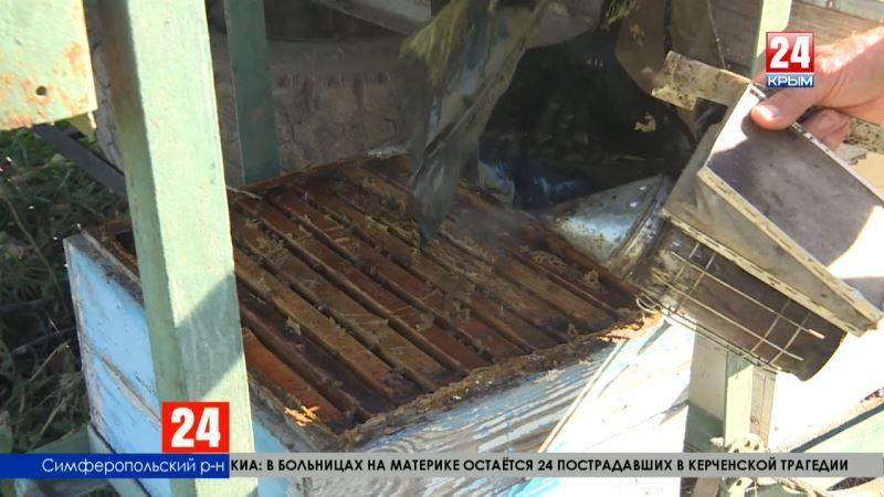 Несладкие перспективы крымских пчеловодов. Засуха и ядохимикаты ударили по урожаю мёда в этом году