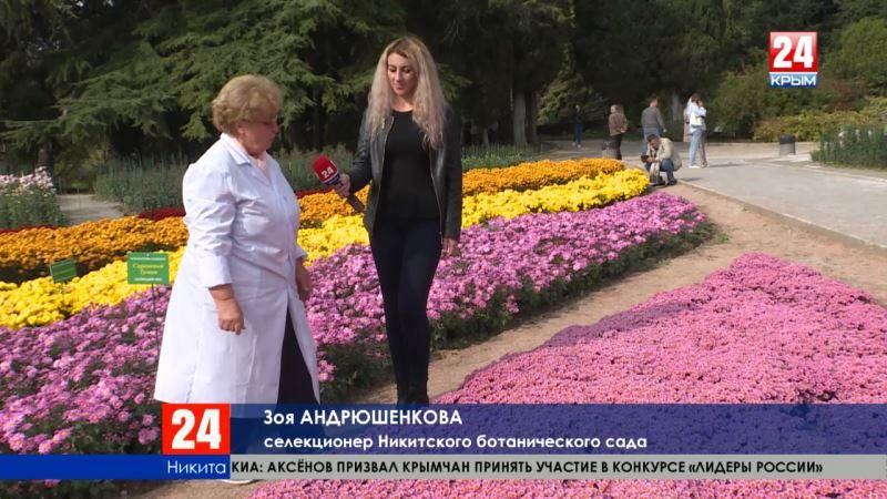 «Сестрица Алёнушка», «Нежное утро», «Меркурий»…Триста сортов хризантем представили на выставке в Никитском ботаническом саду
