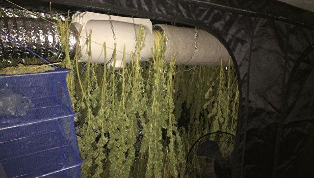 """Собрал """"гербарий"""": у алуштинца нашли почти девять кг конопли"""