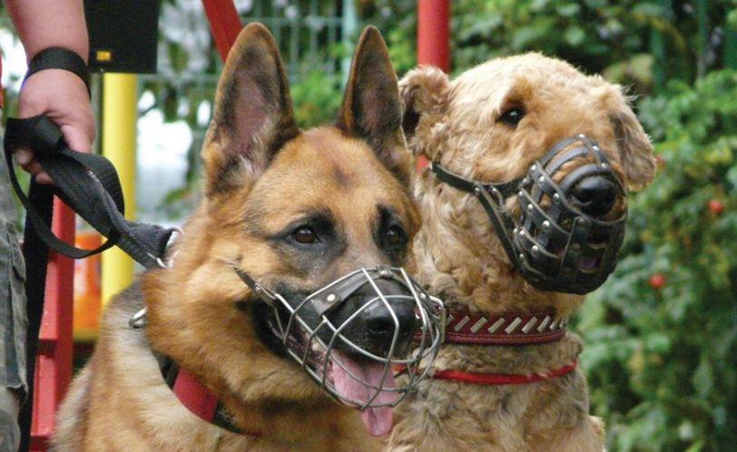 В Симферополе приняли Правила содержания домашних животных