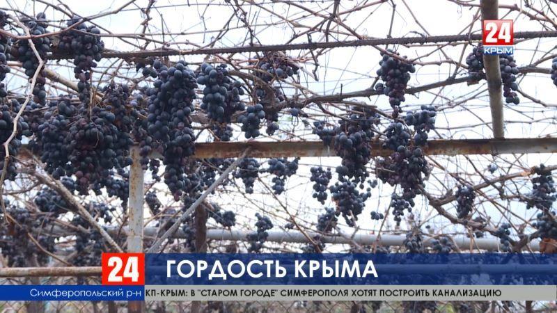 Крымские гроздья-гордость аграриев. На полуострове завершили сбор винограда