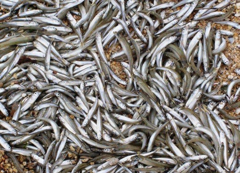 В Крыму поймали рыбака-браконьера. Улов обошелся дорого – в 330 тысяч рублей