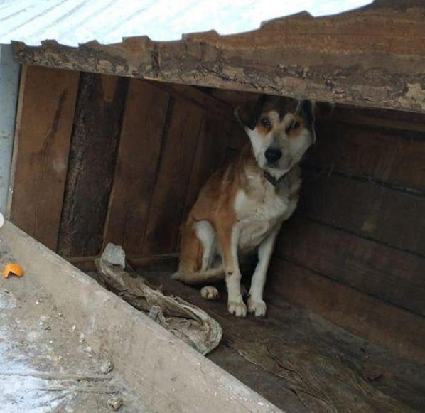В приюте «Дружок» нашли десятки трупов и скелетов собак (ФОТО 18+)