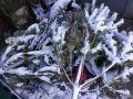 Куда в Симферополе можно сдать новогоднюю елку: адреса