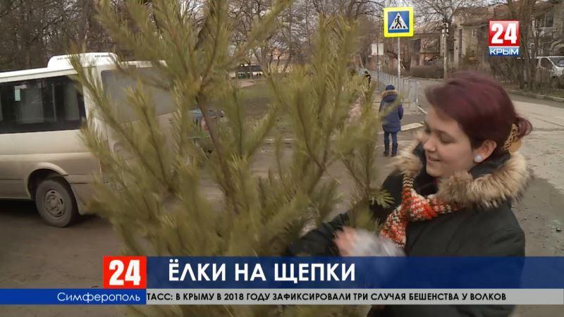 Ёлки на щепки. В Крыму принимают новогодние деревья на переработку