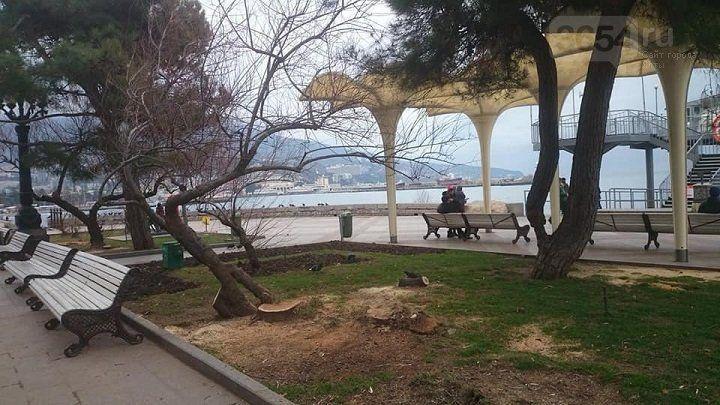 Власти Ялты настаивают, что спиленные на набережной деревья были аварийными; впереди - новые спилы