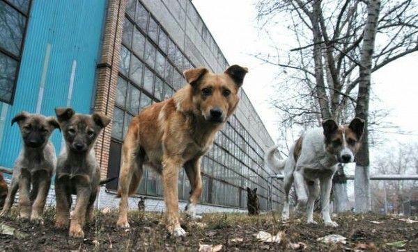 По улицам Феодосии бродит стая собак, которая бросается на прохожих