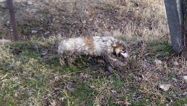 Спасение мохнатого друга: в Крыму вытащили из канализации собаку