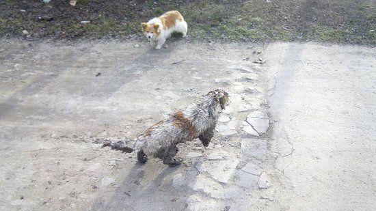 В Крыму МЧСники вытащили из канализации собаку,