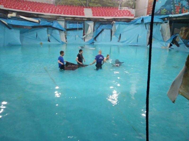 В крымском дельфинарии МЧС спасло двух дельфинов из лопнувшего бассейна,