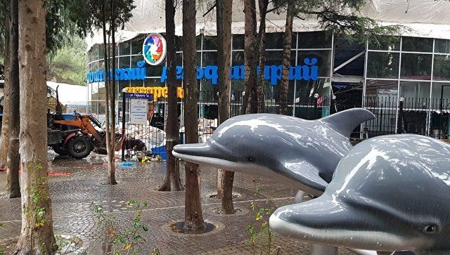 В алуштинском дельфинарии назвали причину ЧП