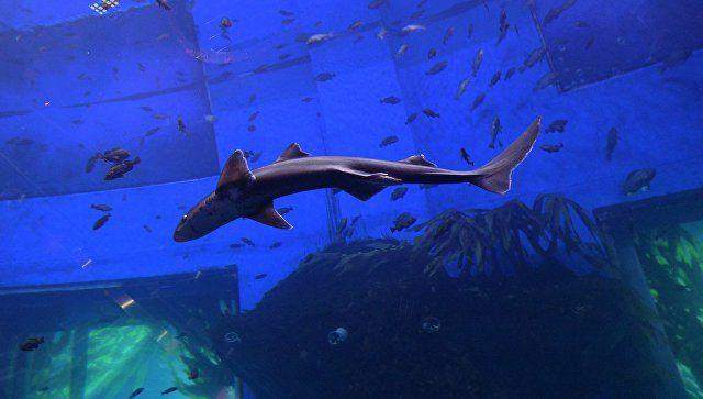 Свои за стеклом: в Керчи ищут инвестора для создания уникального аквариума