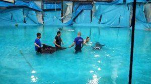 В алуштинском дельфинарии сотрудники МЧС спасли дельфинов из поврежденного бассейна