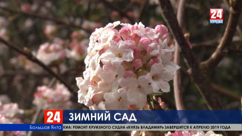 Крым расцвёл: в Никитском ботаническом саду проснулись редкие зимние растения