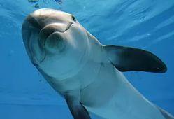 В Алуштинском дельфинарии произошла авария