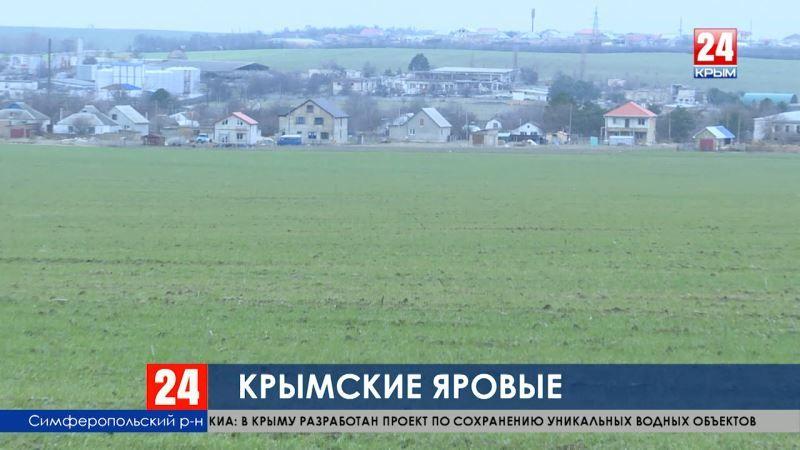Крымские яровые. Готовится миллионный урожай - аграрии начали засевать поля зерновым и зернобобовыми культурами