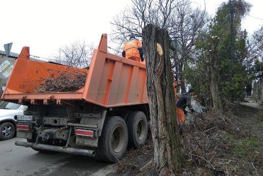 Симферопольский «Город» приступил к сносу и обрезке деревьев