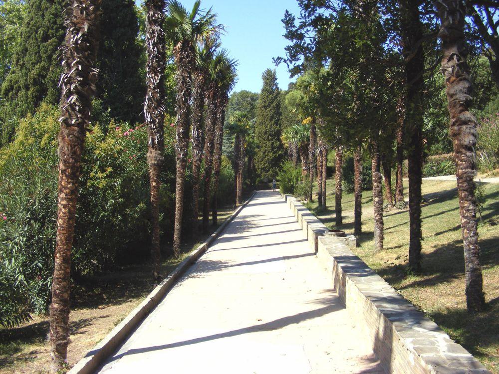 На Южном берегу могут погибнуть все пальмы