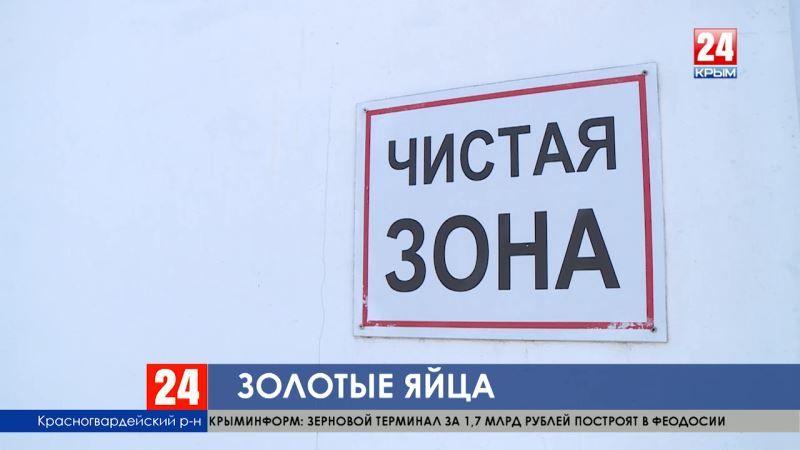 Триста миллионов яиц. Крымские куры-несушки обеспечили три четверти потребности региона