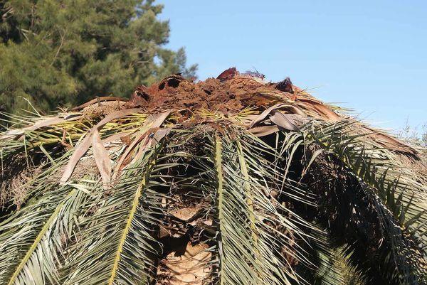 Пропадают пальмы и колонны